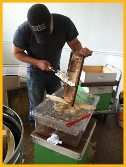 Honey Harvesting Supplies, Uncappers, hot knives, sieves, bee escapes, cut comb supplies, buckets with honey gates