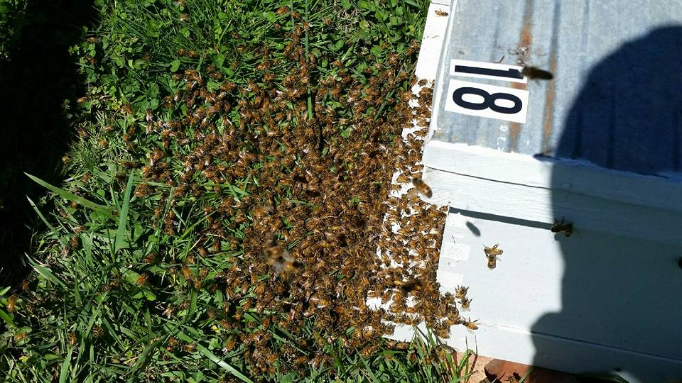Practical Beekeeping with Carl Rhoden