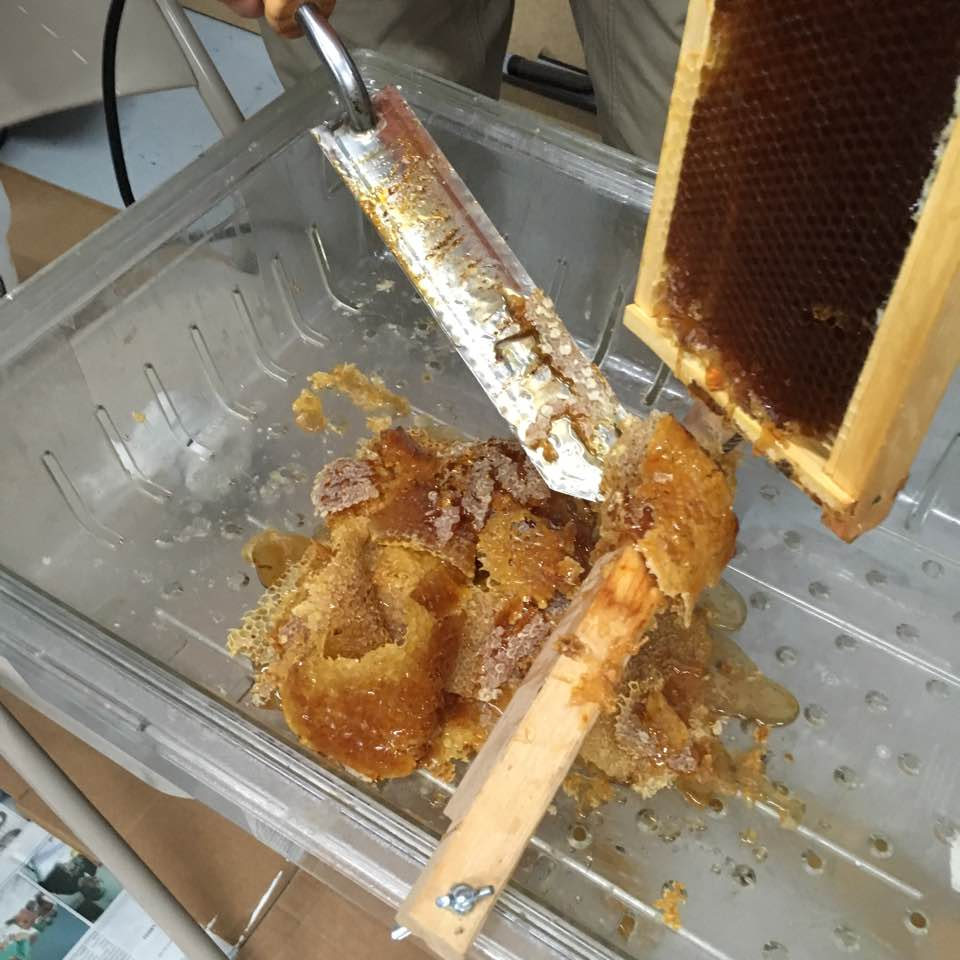 Workshop June 2016 Honey Harvesting